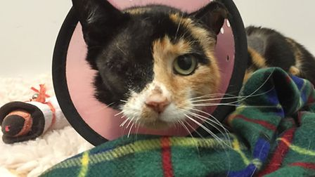 Phoebe taken into Wood Green Animal Shelter following accident