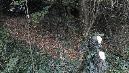 The bank of the old clay pit which has been filled in and now lies beneath Bridle Close and Fontmell