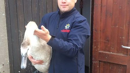 Firefighter Joe Gacon saved swan from drivers on the A1