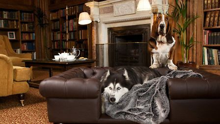 Heritage chic - dog beds fit for an English manor