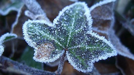 Frosty ivy - simple yet stunning