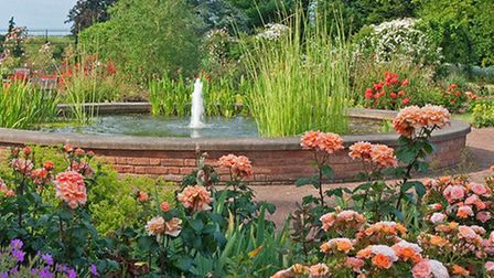 The rose gardens at Chiswell Green