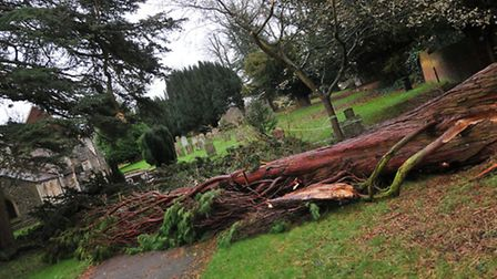 A tree which fell in high winds in St Michael's church yard