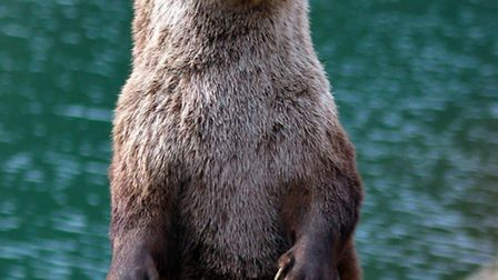 Are there otters living near Verulamium Park?