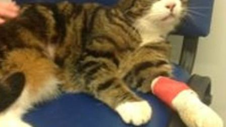 Family cat Pippin had to be rescued after becoming wedged in a six-inch gap between two houses