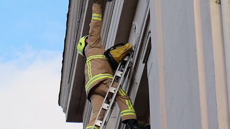 A firefighter climbs a ladder to rescue a pigeon with its wing tangled in netting on the side of the