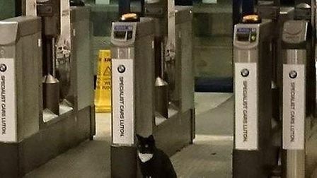 Brian the cat, actually called Obama, has been living in St Albans station since last summer