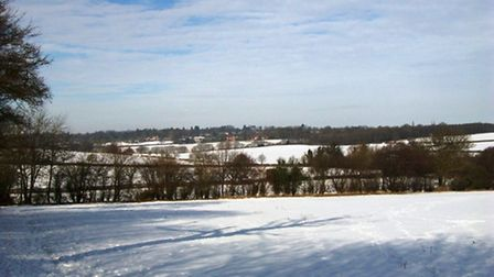 Views from Heartwood Forest