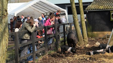 Visitors to the lambing weekend at Oaklands College
