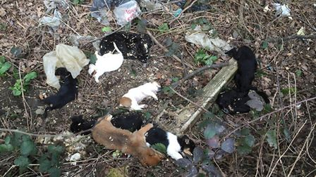 The bodies of puppies were found at the side of the road
