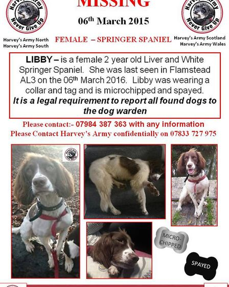 Distraught owner Holly Parsons is urgently trying to find her stolen dog, Libby, a Springer Spaniel.
