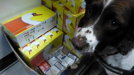 Bradley the detection dog with some of the recovered cigarettes