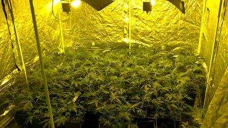 Cannabis plants were seized from a property in Markyate