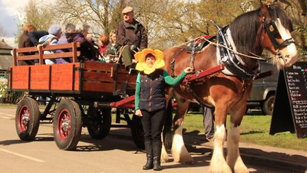 Janet Jenkinson with the Woodfordes Brewery Dray, all the way from Norfolk. PICTURE: Clive Porter.