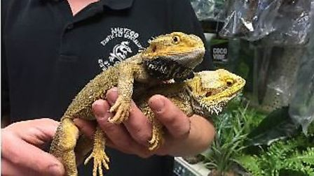The RSPCA is tending to the lizards