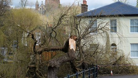 The fallen willow tree at the bottom of Holywell Hill which was damaged in storm Katie