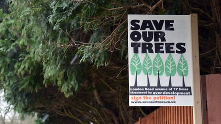 Demo over fate of London Road trees