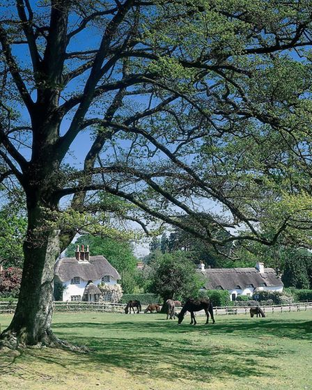 Swan Green, the New Forest