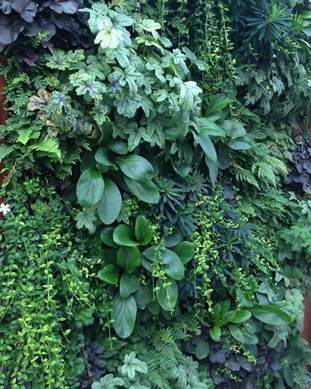 Shade tolerant walls usually provide the best coverage and texture