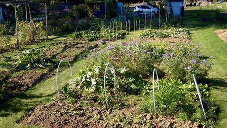 Growing Roots was set up so vulnerable people could spend time outdoors planting fruit and vegetable