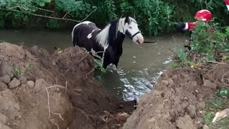 The RSPCA helped rescue the pony from the river.