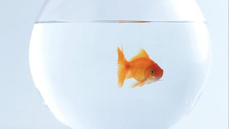A fish is the ultimate low-maintenance pet