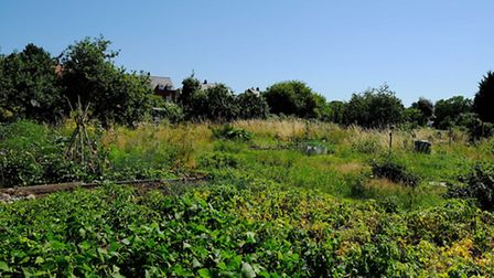 The allotments behind Folly Lane.
