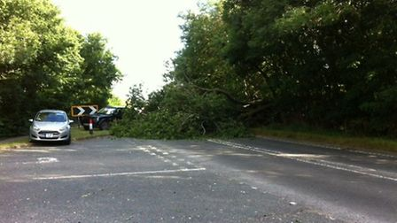 The tree blocked Ermine Street at its junction with Green End.