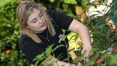 Herts Advertiser reporter Andrea Pluck helps replenish the food for the butterflies at Whipsnade Zoo