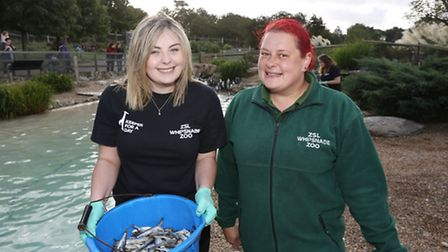 Herts Advertiser reporter Andrea Pluck and park bird keeper Mairee Vincent feeding the penguins at W