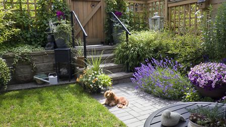 Vertical planting is recommended for small gardens