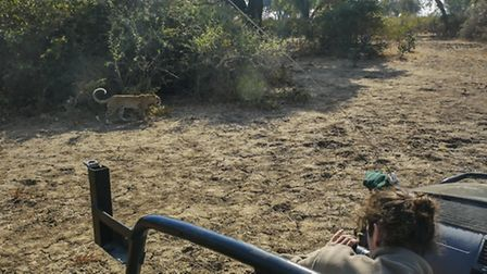 Luke Massey, of St Albans, is a wildlife photographer who travels the world, taking photos of leopar