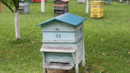 Oh, beehive: one of the zanier items an ex-tenant admitted to having taken...