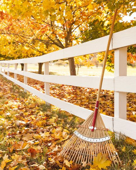Rake fallen leaves out of the borders and off lawns and compost to provide an organic mulch