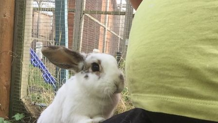 She has been running The Rabbit Residence Rescue for 20 years.