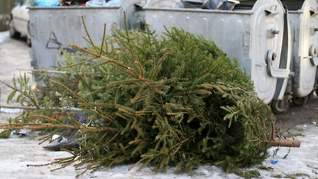Turns out there are plenty of tree-disposal options...