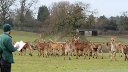 ZSL Whipsnade Zoo's annual stocktake.