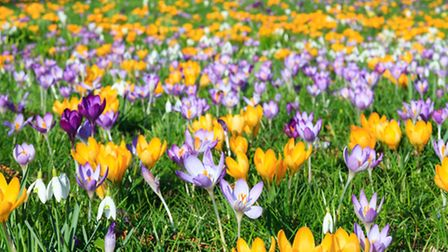 Colourful crocuses are another thing to look forward to.