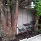 Sara believes that only one of the trees were causing an issue to neighbours and was shocked to find