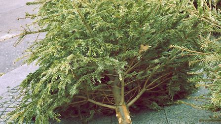 Binning your tree may not be your only option, as Kate explains