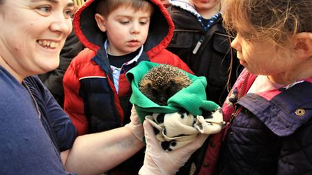 Raffy and Alesha being shown Charlie Rose , one of the many baby patients at Shepreth Hedgehog Hosp