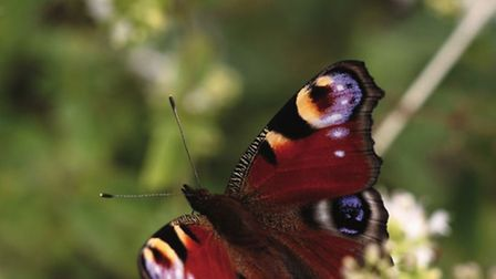 Two butterfly hotspots have been found