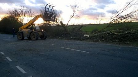 Trees being cleared from the A141, between Wyton and Hartford.