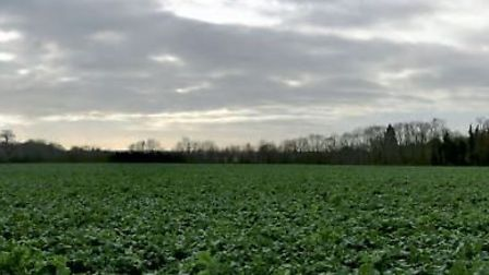 Furze Field, near Sandridge, could have 0.45 million tonnes of sand and gravel extracted by Cemex in