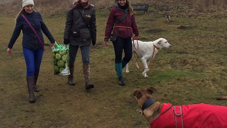 Amber Godfrey, Lily Clark and Francesca Hill, with dogs Sunny and Jasper. Picture: Sally Marchant
