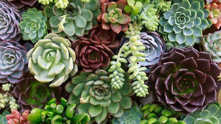 Succulents make a low-maintenance house plant