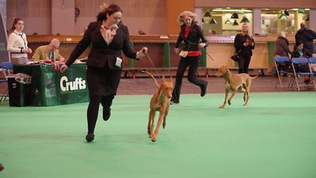 Rhian and Tess at Crufts 2017. Picture: Graham Reeve