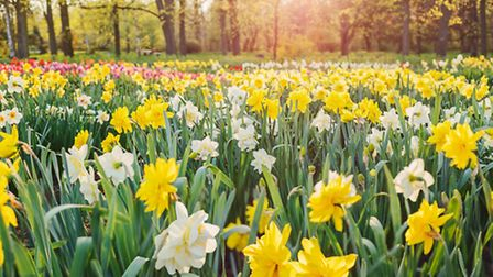 Spring has sprung: Daffodils and crocuses mark a change of season