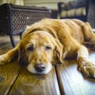 Renting with pets is not without its drawbacks