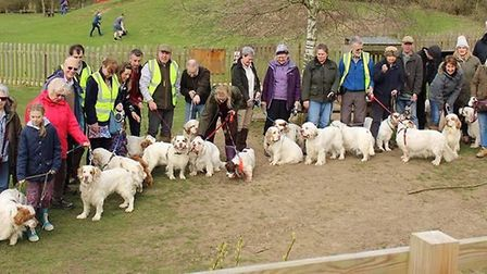 Clumber spaniels and their owners at Hinchingbrooke Park, in Huntingdon.